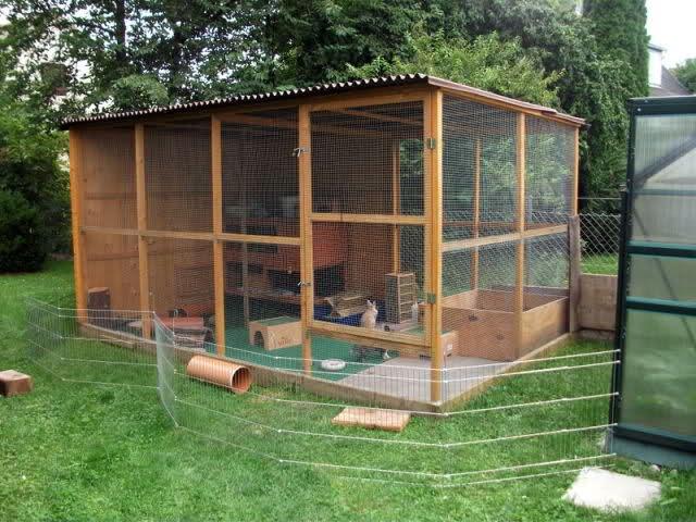haltung und f tterung kaninchen und meerschweinchen wissenswertes animaldoc. Black Bedroom Furniture Sets. Home Design Ideas